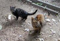 Cat_dsc06067