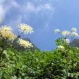 070812ブナグラ谷の登り