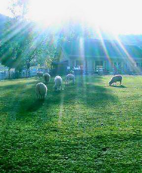 牧場の昼下がり