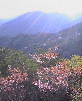 六甲山上はこれから春本番
